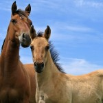 How Do You Tell When Your Horse Is Not Well?