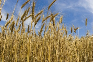 Crops and Herbicides